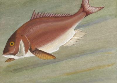 9 Pesce